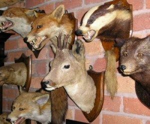 taxidermy wall